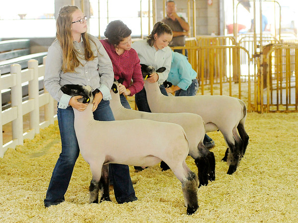 Don Knight | The Herald Bulletin<br /> Gabby McClintick looks to the judge while presenting her sheep during the supreme showmanship competition during the Madison County 4-H Fair on Thursday.
