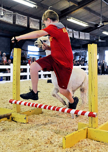 John P. Cleary | The Herald Bulletin Landon Bloyd, 10, leads his llama over the bar as they compete in the obstacle course during the 4-H Llama/Alpaca Fun Show Friday.