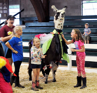 John P. Cleary | The Herald Bulletin This team cheers for their costumed llama during the 4-H Llama/Alpaca Fun Show Friday at the 4-H Fair.