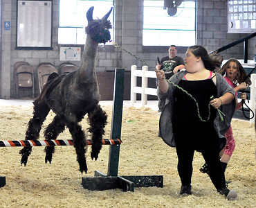 John P. Cleary | The Herald Bulletin Friday at the Madison County 4-H Fair.