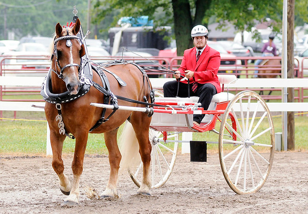 Don Knight | The Herald Bulletin<br /> Joe Mares and his horse Big B compete in the pleasure driving category during the Horse and Pony show at the 4-H Fair on Saturday.