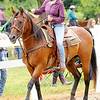 Don Knight | The Herald Bulletin<br /> Horse and Pony show at the 4-H Fair on Saturday.
