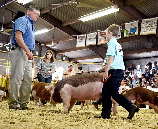 John P. Cleary | The Herald Bulletin<br /> 4-H Swine Show judge Brett Beyers takes a close look at Caleb Fisher's Hereford Barrow during judging Monday at the Madison County 4-H Fair.
