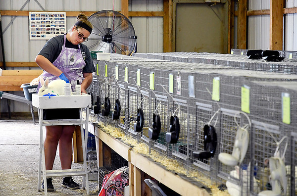 John P. Cleary | The Herald Bulletin<br /> Monday at the 2019 Madison County 4-H Fair.