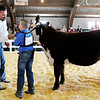 Don Knight | The Herald Bulletin<br /> Beef judge Brandon Bratcher from Elizabeth Ind. selects Brody Everhart as Reserve Champion Junior Showman during the Beef Show at the 4-H Fair on Tuesday.