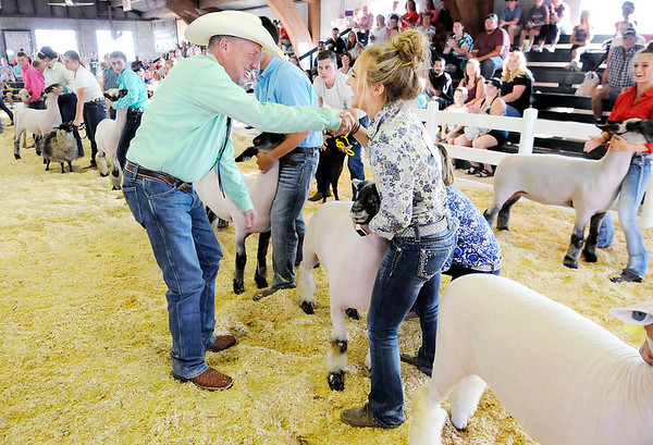 Don Knight | The Herald Bulletin<br /> Judge Mark Johnson selects Noelle Loller's Dorset Advantage yearling ewe as the Grand Champion Ewe during the Championship Sheep Show Wednesday at the 4-H Fair.