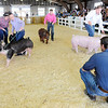 Don Knight | The Herald Bulletin<br /> Judge Beau Ely evaluates Supreme Showmanship contestants at the 4-H Fair on Thursday. From left are Alexis Hickman, Cagney Utterback, Jason Gray and Miller Smith.