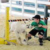 Don Knight | The Herald Bulletin<br /> Riley Porter leads his alpaca Iceman under a limbo pole during the Llama/Alpaca show at the 4-H Fair on Friday. Porter and Iceman tied with Alexandra Prince and her llama Blue in the limbo contest.
