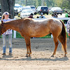 Don Knight | The Herald Bulletin<br /> Friday at the 4-H Fair.