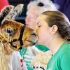 Don Knight | The Herald Bulletin<br /> Ellie Bloyb gives her llama Bruee a kiss during the Llama/Alpaca show at the 4-H Fair on Friday.