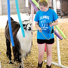 Don Knight | The Herald Bulletin<br /> Katie Green leads her lama B.J. through an obstacle course during the 4-H Fair on Friday.