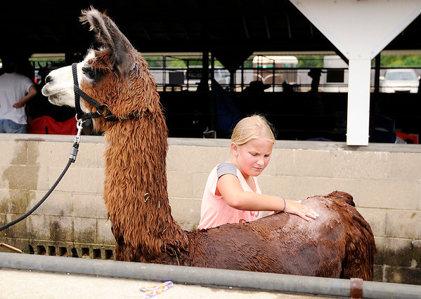 Don Knight | The Herald Bulletin<br /> Ashlie Arteritano, 11, washes her lama Jackie at the 4-H Fair on Friday.