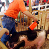 Daren Martin sprays his pig down with water to keep it cool as he watches the judge for when to go back out into the show arena during swine judging Monday at the Madison County 4-H Fair.