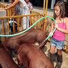 Rylee Ugen, 8, cools  her hogs down outside the swine barn Monday at the 4-H Fair.