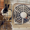 4-H'ers used battery powered fans attached to their cages to help keep their animals cool.