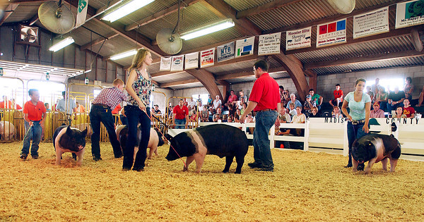 Swine was the order of the day in the show arena Monday.