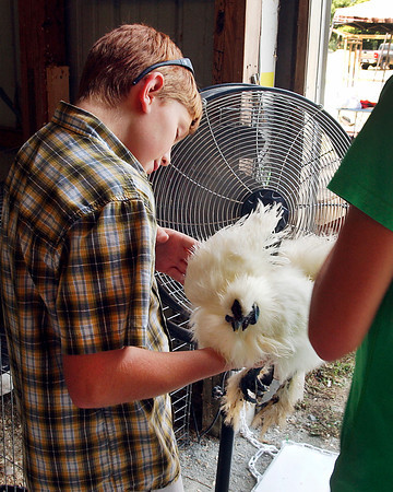 Oliver Zay, 12, holds his bird in front of a fan to help keep it cool during the Poultry Show Monday at the Madison County 4-H Fair.