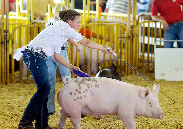 Stephanie Morris keeps her eyes on the judge as she keeps her pig under control during judging Monday at the 4-H Swine Show.
