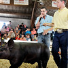 John P. Cleary |  The Herald Bulletin<br /> Swine judge Miles Tdenyes gives comments as Chandler Lowes parades his champion heavy weight division Cross Bred Barrow around the show ring Monday.