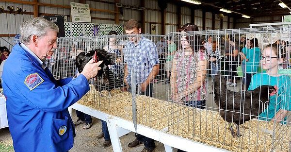 John P. Cleary |  The Herald Bulletin<br /> Poultry judge Bob Gilbert examines this Australorp during the Madison County 4-H Poultry Show Monday as the 4-H exhibitors watch the judge.