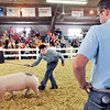 John P. Cleary |  The Herald Bulletin<br /> Braeden Dalzell keeps his eyes on the judge as he shows his cross Bred barrow in the middle weight division Monday at the Madison County 4-H Fair.