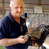 Poultry judge Tim Boles examines the feathers on this bird during judging Monday at the Madison  County 4-H Fair.