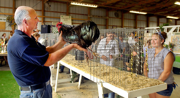 Poultry judge Tim Boles holds up and examines Lexi Allen's English class bird as she looks on anxiously during poultry judging Monday at the Madison County 4-H Fair.  Allen is from Lapel and is a member of the Lapel Live Wires 4-H Club.