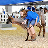 Don Knight | The Herald Bulletin<br /> Alexis Allmond leads her lama Silver under a pop-up tent at the 4-H Fair on Saturday.