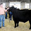 Don Knight | The Herald Bulletin<br /> Supreme Showmanship at the Madison County 4-H Fair on Thursday.