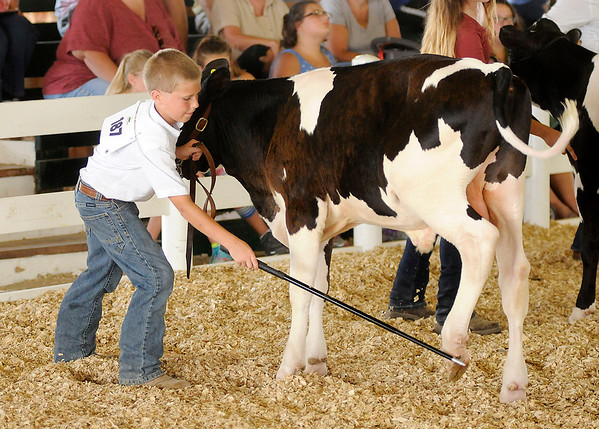 Don Knight | The Herald Bulletin<br /> JT Needler arranges the feet of his feeder calf during the Dairy Show at the 4-H Fair on Wednesday.