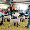 Don Knight | The Herald Bulletin<br /> 4-H Fair on Wednesday.