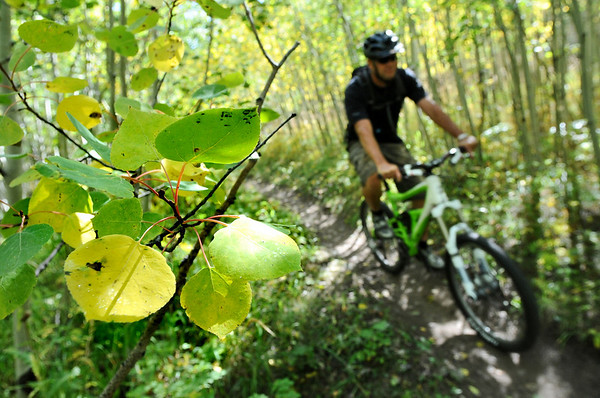 ASPEN04<br /> Aspen leaves show the first hint of yellow while Chris Cheek rides his mountain bike near Nederland on Friday. The aspen trees are just starting to change in Boulder County.<br /> Photo by Marty Caivano / The Camera / Sept. 18, 2009