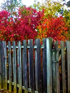 """Fall Beauty"" by Travis Spillane Digital Photography Class"