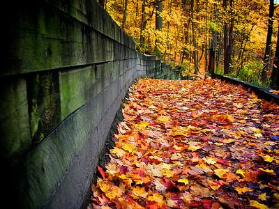 """Fall Beauty"" by Sam Pearson Digital Photography Class"