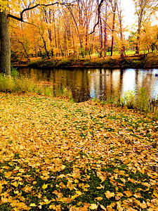 """Fall Beauty"" by Tyler Cerny Digital Photography Class"