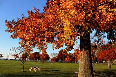 """Fall Beauty"" by Amy Jeon Digital Photography Class"