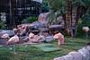 171216_Vegas_XT23780-4