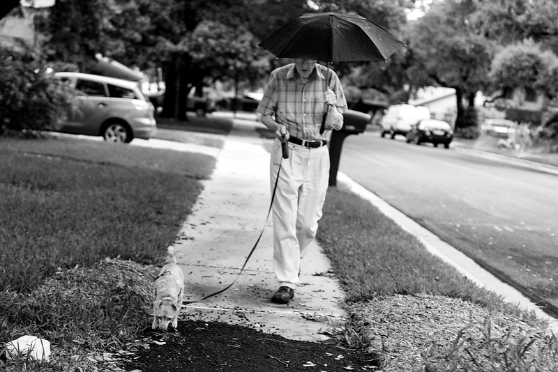 Walking Lola, 2016