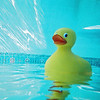 Duckie.