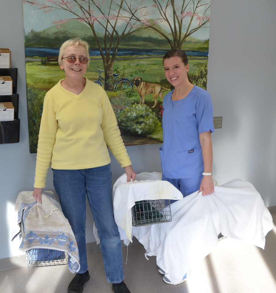 Lora Meisner of Coalition Advocating for Animals (CAFA) picks up cats after surgery.