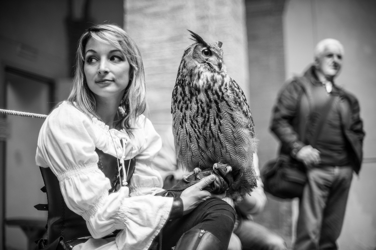 Magò, the howl - Freddy's falconry show