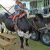 Ride 'em cowboys !!!