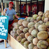 "Kadayawan Festival in Davao may be over but the fresh harvest of durian fruit is still coming in, hence this vendor's offer of an ""Eat all you can Durian"" from his location outside the Pasalubong Center beside People's Park. At only a cost of P89, grab the chance to feast yourself of its heavenly taste and smell right after lunch time until the evening. When asked when this promo will last, the stall owner merely smiled and said, ""Until supply lasts.""  (Photo by Jojie Alcantara)"