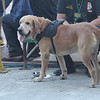 K9 dog deployed at grandstand during Sinulog 2016 grand parade