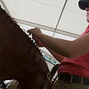 Record-Eagle/Douglas Tesner<br /> Tracy Mathews, of Northern Pines Farm in Maple City, takes a close look at braids she has woven into a horse's mane before it takes part in the computation.  According to Mathews it takes between 30 minutes to one hour to do each horse.