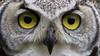 """""""OWL EYES"""""""