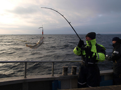 Fishing trip on board the good ship 'Hanne Berit of Rungsted' Photo: Martin Bager.
