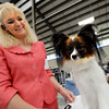 Flatirons Kennel Club Dog Show