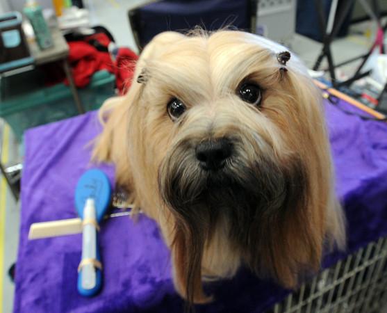Flatirons Kennel Club Dog Show