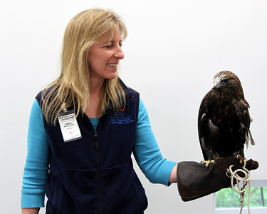 Ellen and Jasper gives the rough legged hawk story